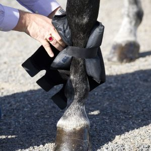 Ice Horse Tendon Wraps Fitting