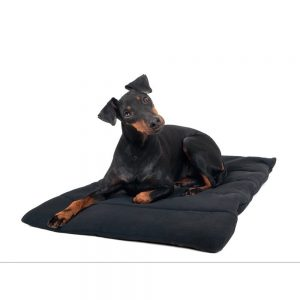 Back on Track Dog Blanket