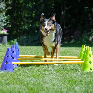FitPAWS Agility Kit