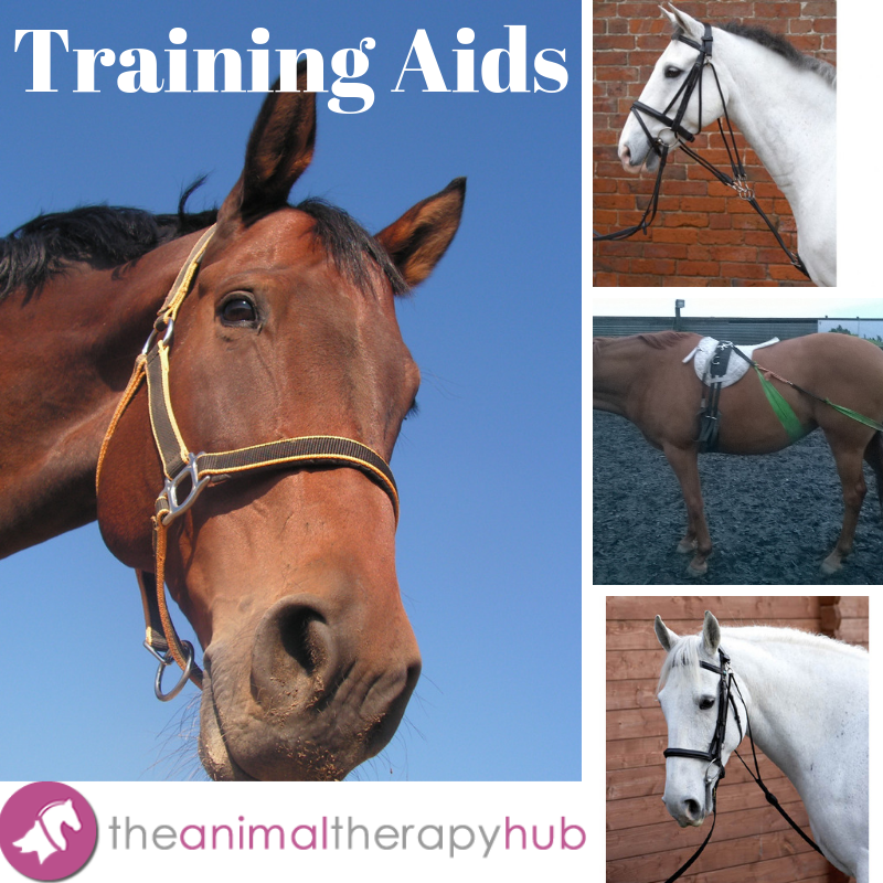 Horse Lunge Training System~Helps Build Top Line /& Engaging Hind Quarters
